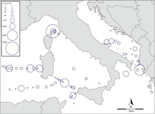 mapa microplastiche mediterraneo