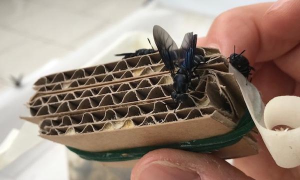 Enea ricerca insetti