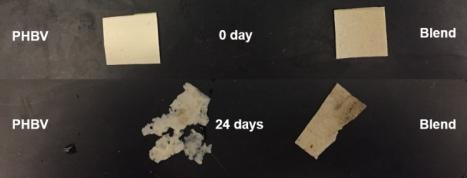 ibrido gomma biodegradazione